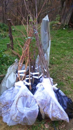 Sadike izbranih ekoloških dreves
